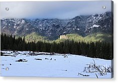Arrival Acrylic Print by Tim Rice
