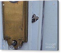 Arrowhead Doorbell Moth Acrylic Print
