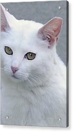 Art Cat Acrylic Print