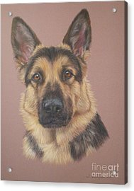 Arthur - German Shepherd Acrylic Print by Joanne Simpson