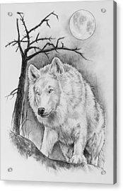 Artic Wolf Acrylic Print by Bernadett Kovacs