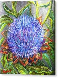 Artichoke Blossom Acrylic Print