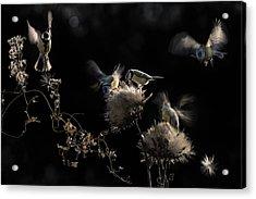 Artichokes Hearts Acrylic Print