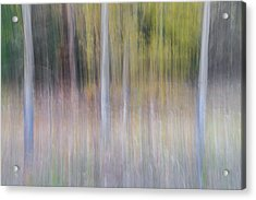 Artistic Birch Trees Acrylic Print