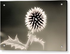 Artistic Black And White Flower Acrylic Print