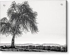 Artistic Black And White Sunset Tree Acrylic Print