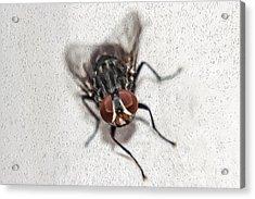 Oil Fly Acrylic Print by Raul Davila