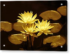 Artistic Gold Tone Water Lilies Acrylic Print by Linda Phelps