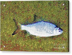 Artistically Painted Fish Acrylic Print by Odon Czintos