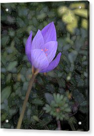 Purple Flower Acrylic Print by John Freidenberg