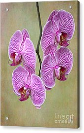 Artsy Phalaenopsis Orchids Acrylic Print by Sabrina L Ryan