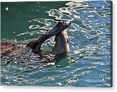 Artsy Sea Lion Acrylic Print
