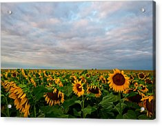 Acrylic Print featuring the photograph As Far As The Eye Can See by Ronda Kimbrow