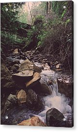 As Free As This Acrylic Print by Laurie Search