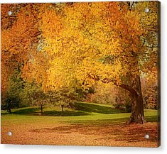 As The Leaves Fall Acrylic Print by Kim Hojnacki