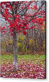As The Red Falls Acrylic Print