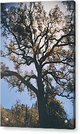 As We Grow And Change Acrylic Print by Laurie Search