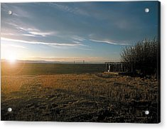 As You Lie In Fields Of Gold Acrylic Print