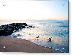 Asbury Seagulls Acrylic Print
