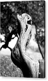 Ascending Branch Acrylic Print by Luna Curran