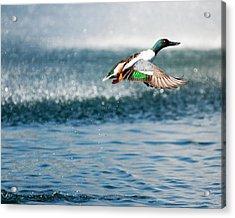 Ascent Acrylic Print