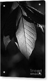 Ash Leaf Acrylic Print