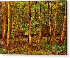 Ash Trees Acrylic Print