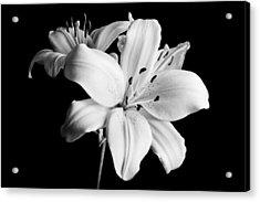 Asian Lilies 1 Acrylic Print by Sebastian Musial