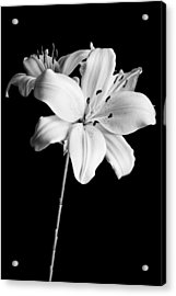 Asian Lilies 2 Acrylic Print by Sebastian Musial