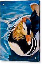 Mandarin Wood Duck Acrylic Print