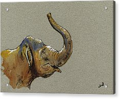 Asiatic Elephant Head Acrylic Print by Juan  Bosco