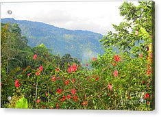 Asiatic Hibiscus Acrylic Print by Tina M Wenger