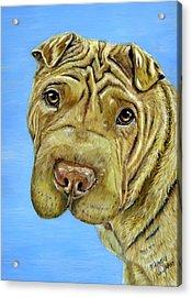Beautiful Shar-pei Dog Portrait Acrylic Print