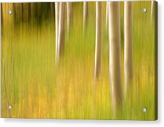Aspen Abstract Acrylic Print by Ronda Kimbrow