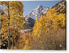 Aspen And Mountains 5 Acrylic Print