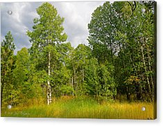 Acrylic Print featuring the photograph Aspen And Others by Jim Thompson