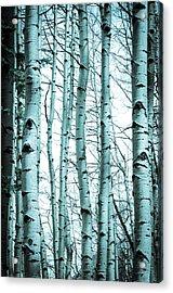 Aspen Blues Acrylic Print by Debbie Karnes