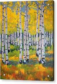 Aspen Color Acrylic Print by Nancy Jolley