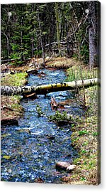 Acrylic Print featuring the photograph Aspen Crossing Mountain Stream by Barbara Chichester