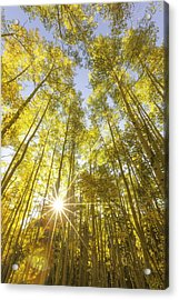 Aspen Day Dreams Acrylic Print by Darren  White