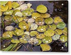 Acrylic Print featuring the photograph Aspen Drops by Darrell E Spangler