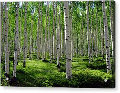 Aspen Glen Acrylic Print by The Forests Edge Photography - Diane Sandoval