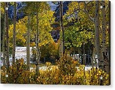 Aspen Glow Acrylic Print by Leland D Howard