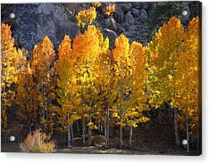 Acrylic Print featuring the photograph Aspen Gold by Lynn Bauer