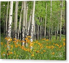 Aspen Grove And Wildflower Meadow Acrylic Print
