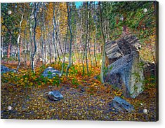 Acrylic Print featuring the photograph Aspen Grove by Jim Thompson