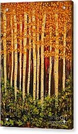 Aspen Grove  Acrylic Print