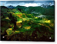 Aspen In Autumn Gold Acrylic Print