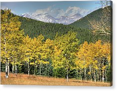 Aspen In Fall Mt Evans Acrylic Print