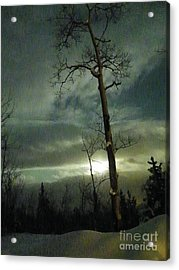 Aspen In Moonlight Acrylic Print by Brian Boyle